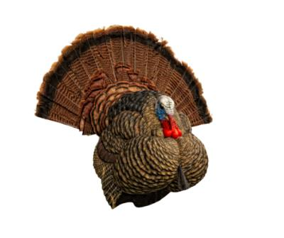 LCD Stutter Turkey Decoy